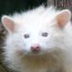 Аватар пользователя pika4uka