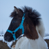 Orehovo.Horse