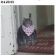 Аватар пользователя Phantomaxim