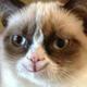 Аватар пользователя Flaconer