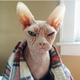 Аватар пользователя KrowArlen