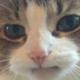 Аватар пользователя stfbee