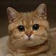 Аватар пользователя 7853Joker