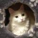 Аватар пользователя Auri