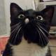 Аватар пользователя N3661