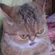 Аватар пользователя Dolbinka