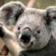 Аватар пользователя SypSvary
