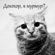 Аватар пользователя Lissariya