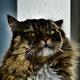 Аватар пользователя Shnorh