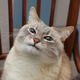 Аватар пользователя Lizonsa