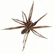 Аватар пользователя 177rus177rus