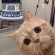 Аватар пользователя tta95