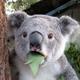 Аватар пользователя v403605