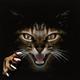 Аватар пользователя Darkghost