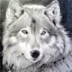 Аватар пользователя WolfWhite
