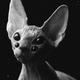 Аватар пользователя LinaSable13