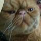 Аватар пользователя chebunyashka