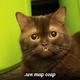 Аватар пользователя blockknight