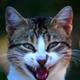 Аватар пользователя silex985