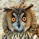 Аватар пользователя MadDadOwl