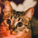 Аватар пользователя dazzlezzzap