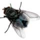 Аватар пользователя BigALex