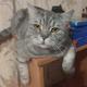 Аватар пользователя mawkov