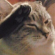 Аватар пользователя CleverGentleCat