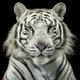 Аватар пользователя tribal2ua