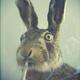 Аватар пользователя Nitort