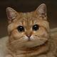 Аватар пользователя hercules007