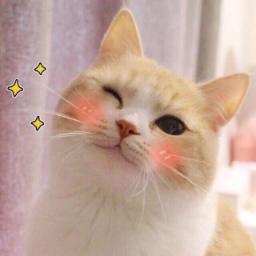 Sawaruneko