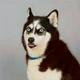 Аватар пользователя bukly163
