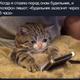 Аватар пользователя Chocolatman
