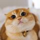 Аватар пользователя Amilya