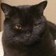 Аватар пользователя Remi44