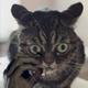 Аватар пользователя hotdog91