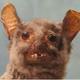 Аватар пользователя etoshtrudel