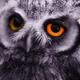 Аватар пользователя SainTLeoniD