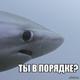 Аватар пользователя Konstantinych