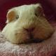 Аватар пользователя Broyler