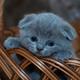 Аватар пользователя Oneton