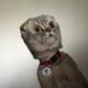 Аватар пользователя Geshem