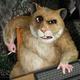 Аватар пользователя Zdrastu
