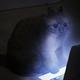 Аватар пользователя madora