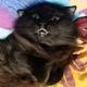 Аватар пользователя VonSL