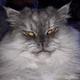 Аватар пользователя 1woke