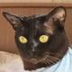 Аватар пользователя ShouTonagura