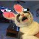 Аватар пользователя Tigrvzasade