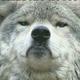 Аватар пользователя shudzijuly